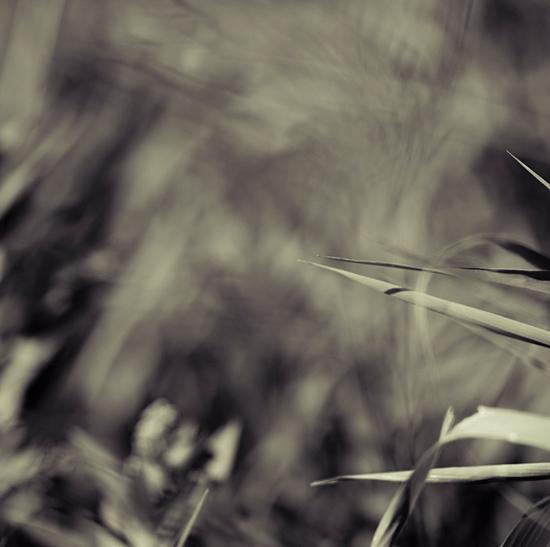 intimate grass